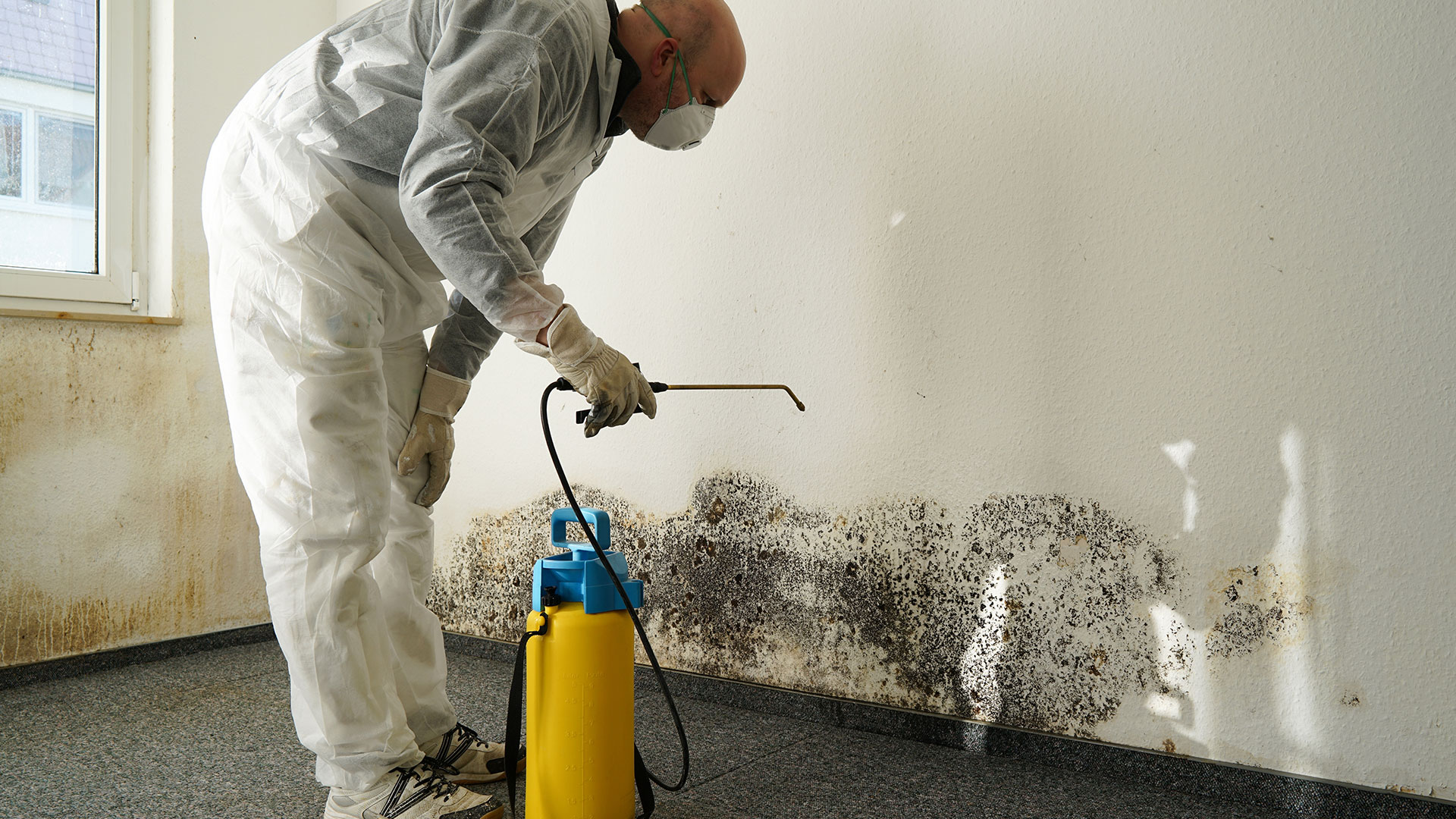 professional removing mold from interior wall